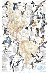 Bird Migration (Americas)