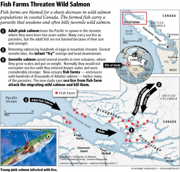 Fish Farms Threaten Wild Salmon